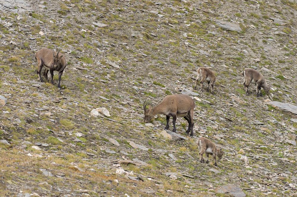 Août et début septembre dans les Alpes Imgp3912