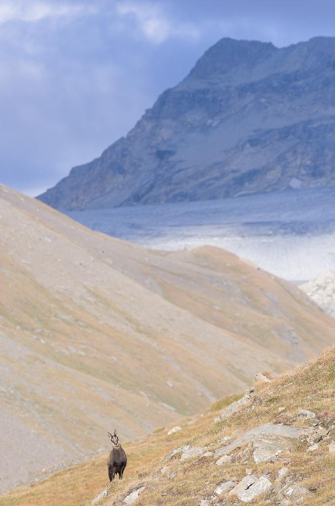 Août et début septembre dans les Alpes Imgp4017