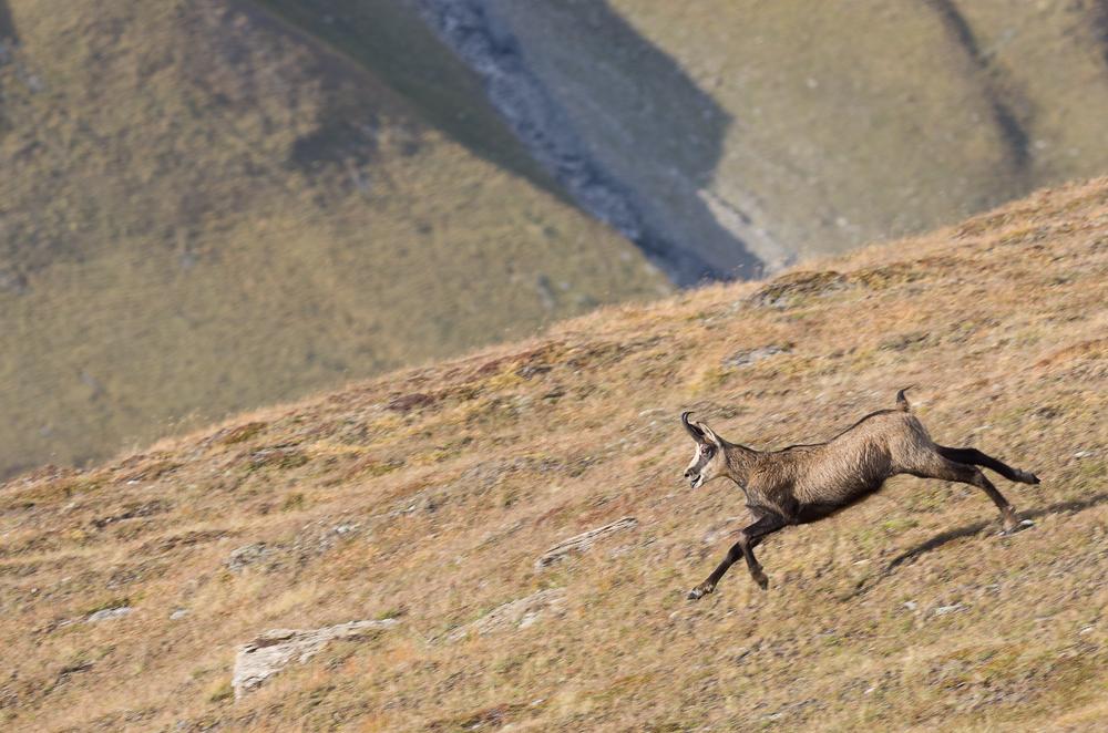 Août et début septembre dans les Alpes Imgp4018