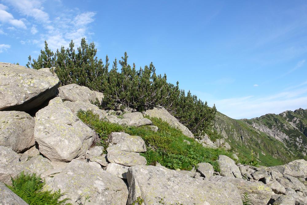 Visite dans le Parco naturale Alpi Marittime 22/07 L1300512