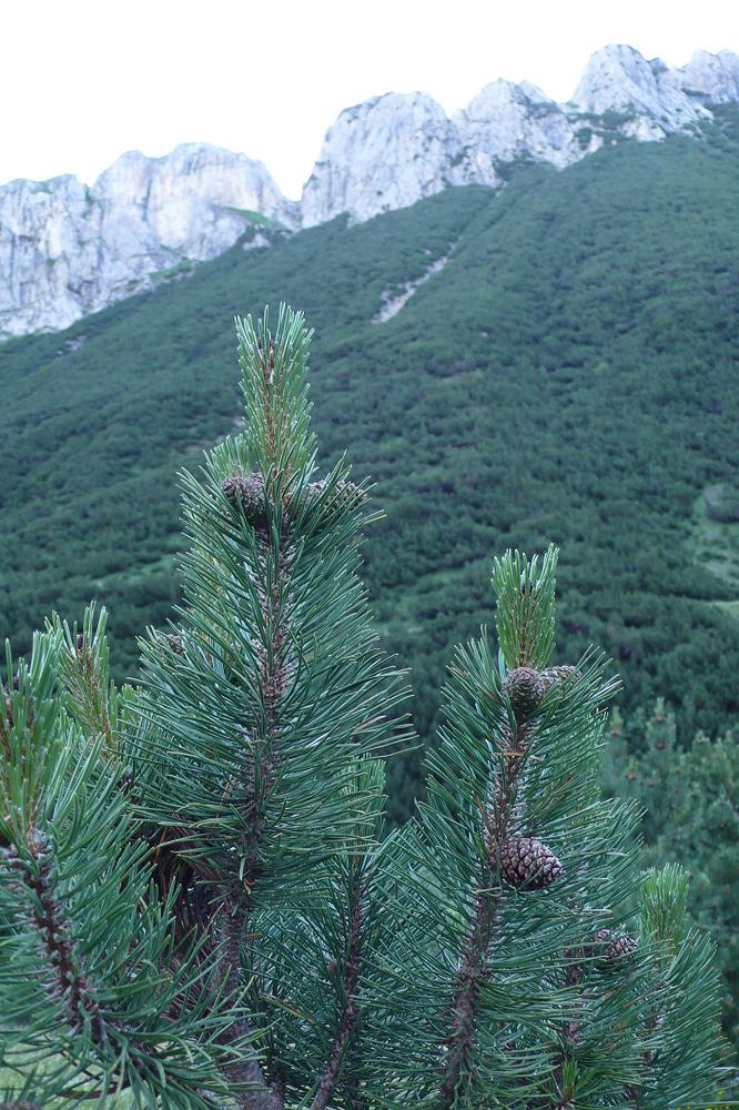 Visite dans le Parco naturale Alpi Marittime 22/07 L1300612