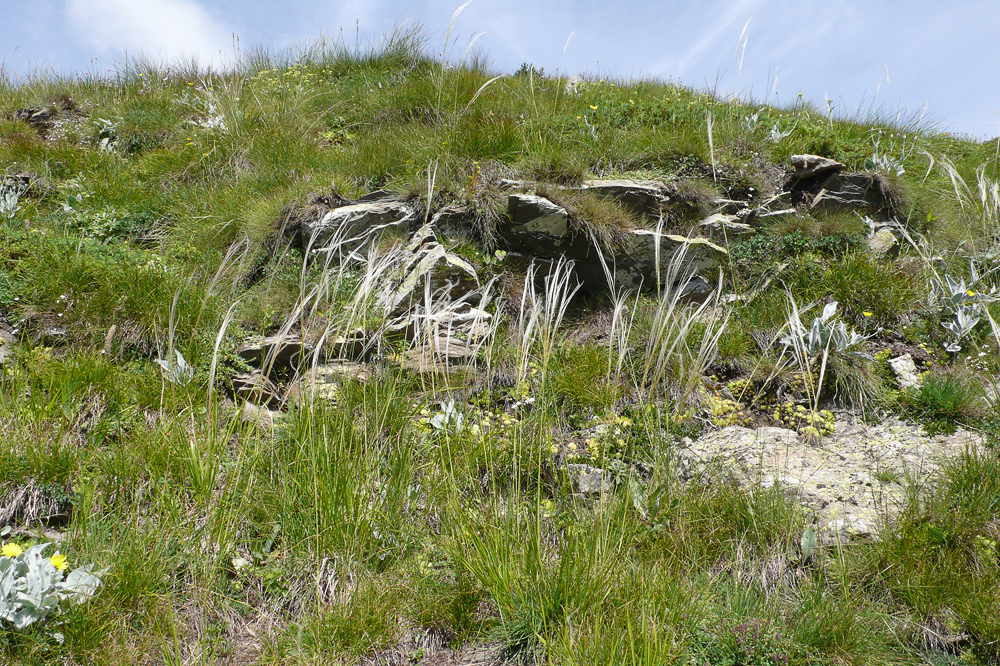 Visite dans le Parco naturale Alpi Marittime 22/07 L1300623