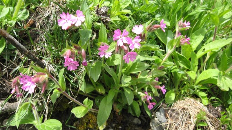 Flore du massif - Page 5 Bellev10