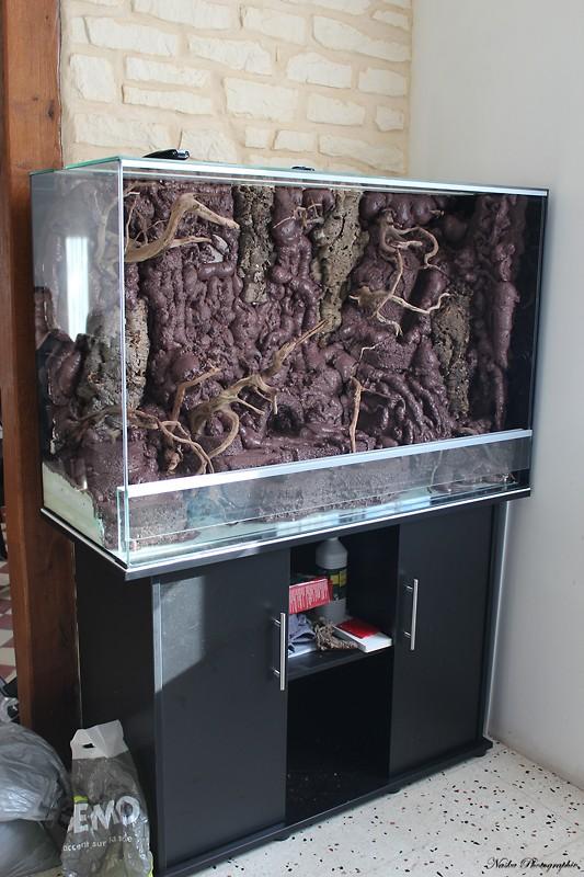 Gros projet Aqua-terrarium pour dendrobates - Page 3 Img_6421