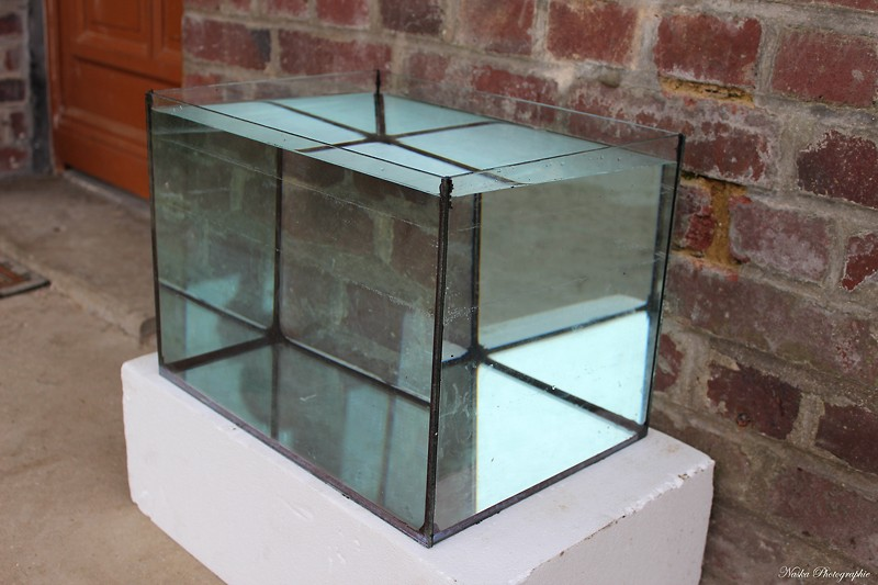 Gros projet Aqua-terrarium pour dendrobates - Page 5 Img_6624