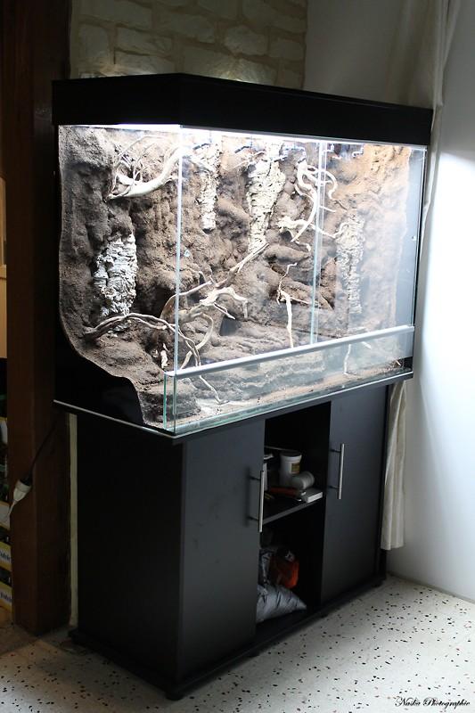 Gros projet Aqua-terrarium pour dendrobates - Page 5 Img_6822