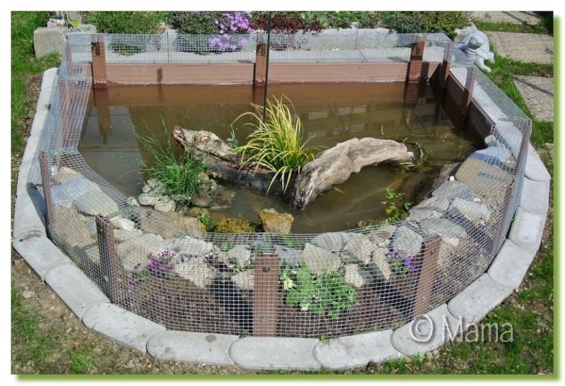 Exemples de bassins extérieurs pour aquatiques