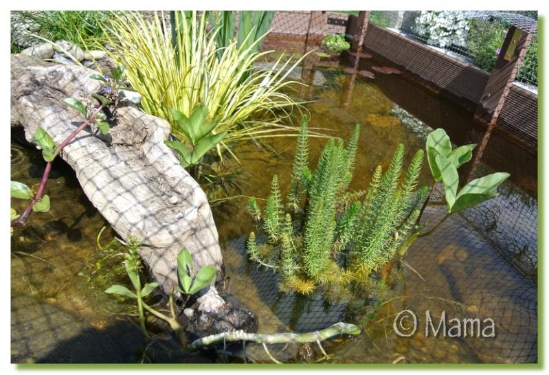 Petite cascade Fontai14