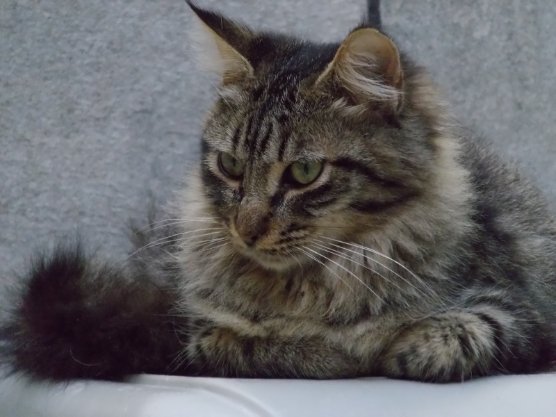 Chatons a adopter Iggy211