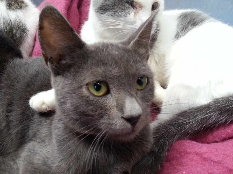 Chatons a adopter Ilou10