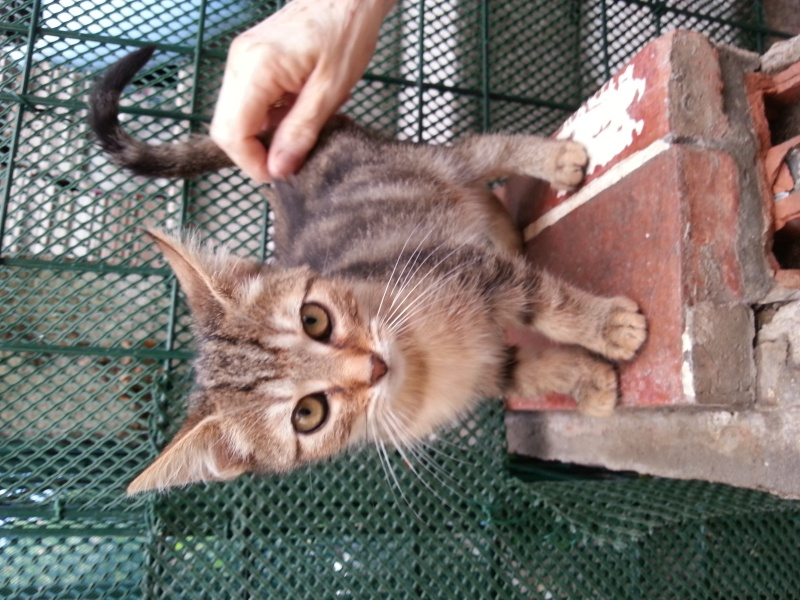 Chatons a adopter Irma10