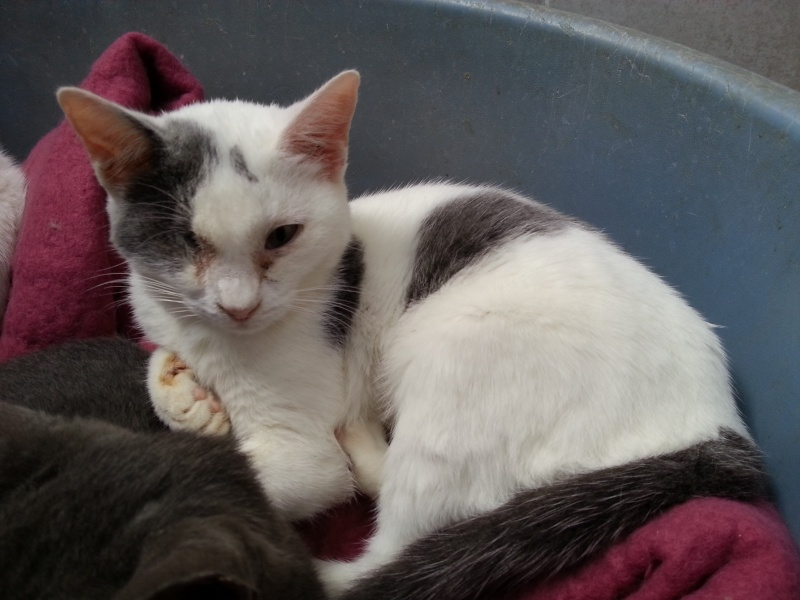 Chatons a adopter Isador10