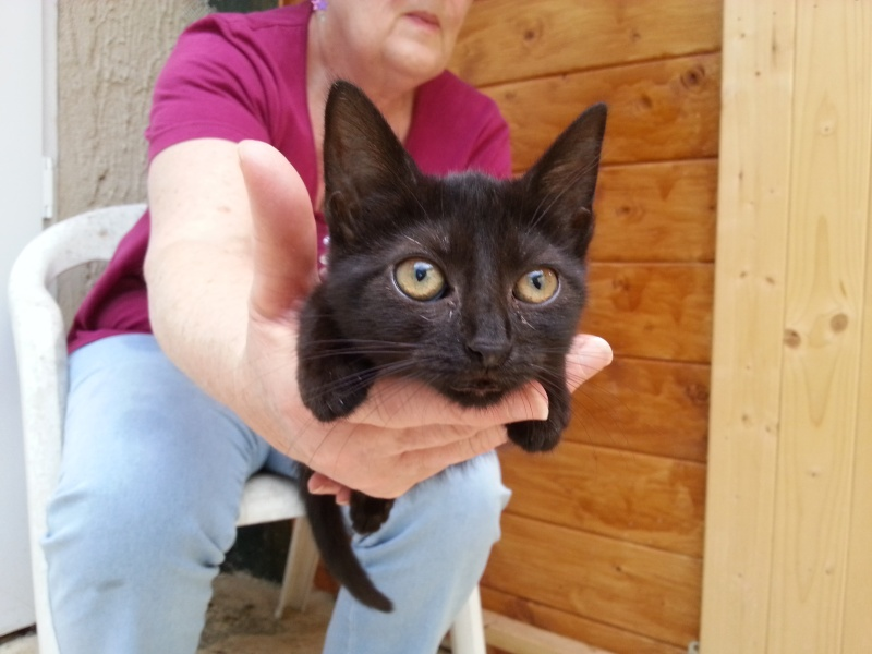 Chatons a adopter Isatis10