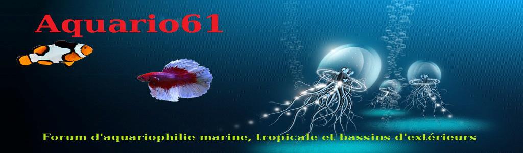 aquario61