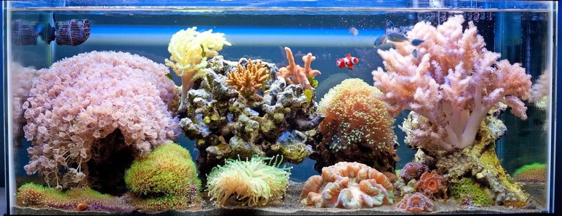 aquario61 Histor10