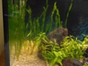 Reprise de l'aquariophilie tout en douceur  P4210010