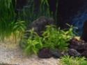 Reprise de l'aquariophilie tout en douceur  P4210011
