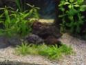 Reprise de l'aquariophilie tout en douceur  P4210012