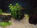 Reprise de l'aquariophilie tout en douceur  P4210013
