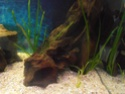 Reprise de l'aquariophilie tout en douceur  P4210014