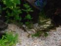 Reprise de l'aquariophilie tout en douceur  - Page 2 P4260012