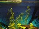 Reprise de l'aquariophilie tout en douceur  - Page 2 P4260013