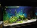 Reprise de l'aquariophilie tout en douceur  - Page 2 P4260015