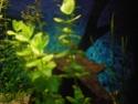 Reprise de l'aquariophilie tout en douceur  - Page 2 P5020010
