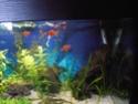 Reprise de l'aquariophilie tout en douceur  - Page 2 P5110011