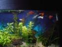 Reprise de l'aquariophilie tout en douceur  - Page 2 P5110012