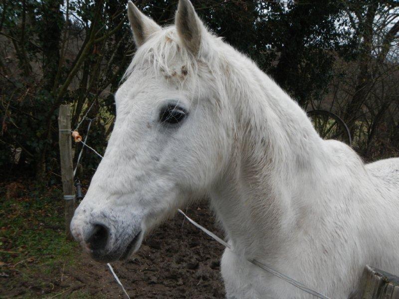 FOREVER (notre mascotte) - Connemara X SF né en 1994 - adopté en novembre 2009 par sophie-france - Page 2 Foreve20
