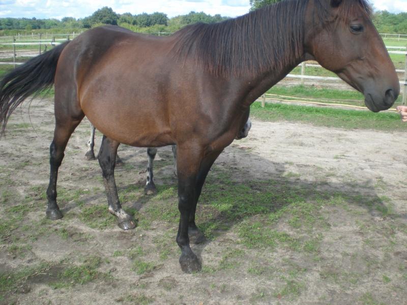 REXANE -  TF née en 2006 - adoptée en mai 2011 par Elodie - Page 2 Rexane10