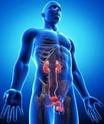 منتدى دكتور خالد أبو الفضل لصوتيات و فيديوهات فسيولوجيا الجهاز البولى Urinary system (Kidney, Renal) Physiology