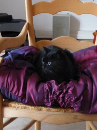 Chatte noire, 6 ans, Var Rouma_11