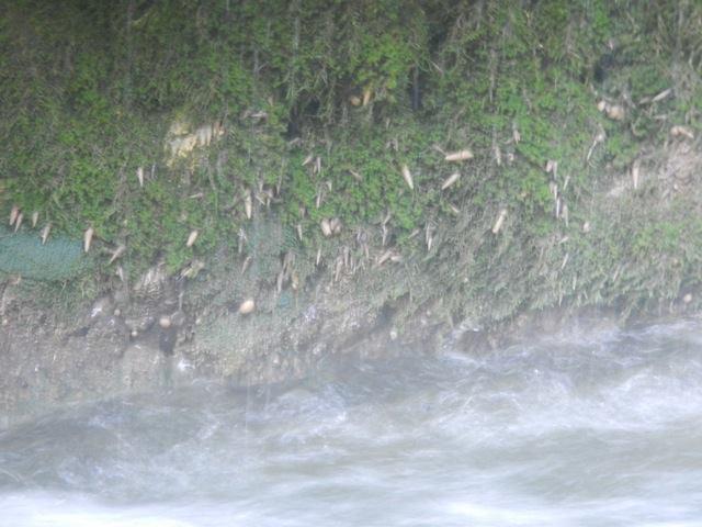 Petite découverte au Vanuatu 14699610