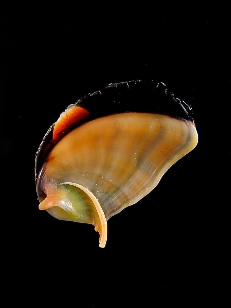 Petite découverte au Vanuatu 14914210