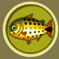 [Liste] Toutes les informations concernant les poissons Dorade10