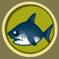 [Liste] Toutes les informations concernant les poissons Requin10