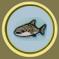[Liste] Toutes les informations concernant les poissons Requin11