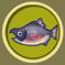 [Liste] Toutes les informations concernant les poissons Saumon10