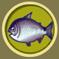 [Liste] Toutes les informations concernant les poissons Saumon11
