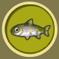 [Liste] Toutes les informations concernant les poissons Saumon12