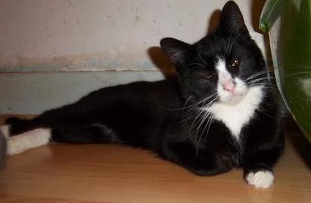 [SAUVETAGE] Harmonie - joli chaton biberon noir et blanc - BEUVRAGES Harmon11