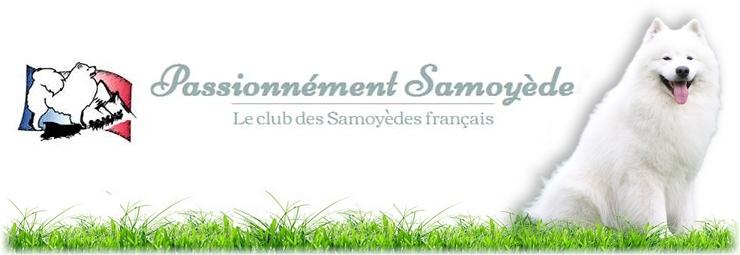 Forum Mon samoyède Fait Son Show