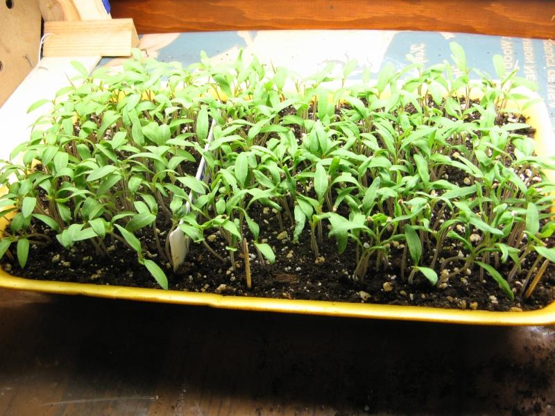 Starting seeds 00710