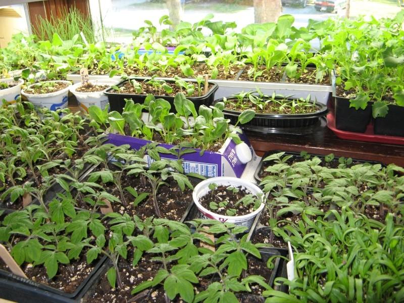 Starting seeds 04610