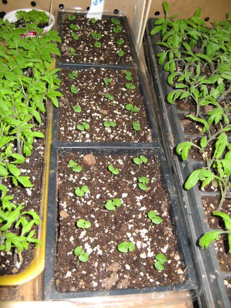 Starting seeds 04710