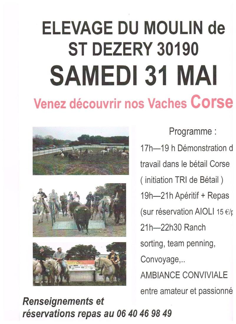 Découverte de l'équitation camargue avec les vaches de race corse, portes ouvertes !!! 31_mai10