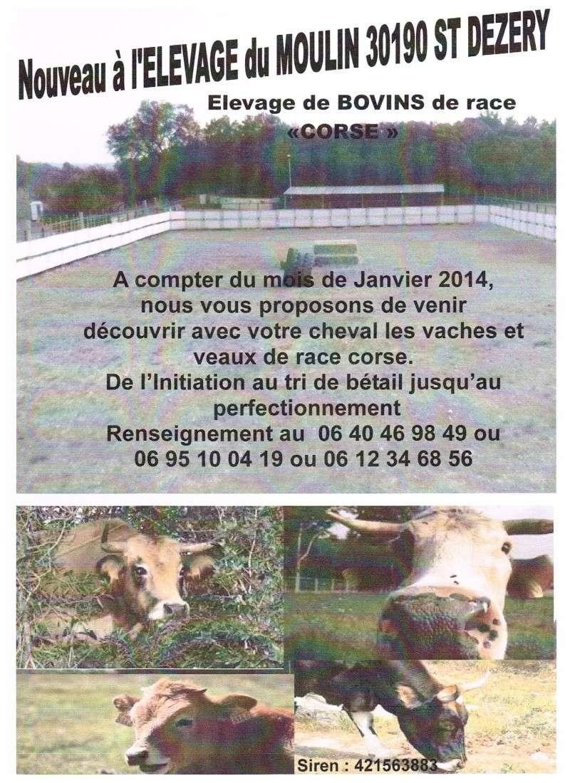 Bétail de race Corse dans le Gard Affich13