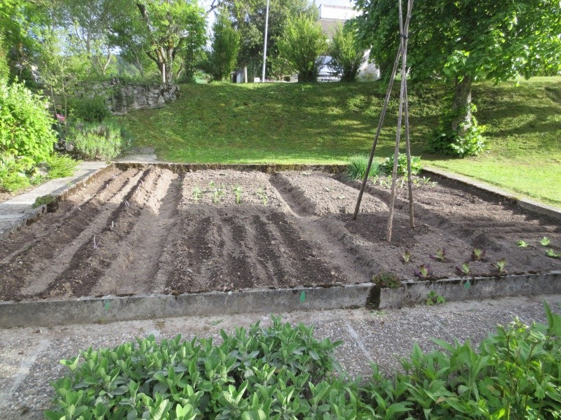 potager - Page 2 Img_4721